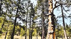 Sun Dappled, Shadowy Forest - stock footage