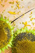 background flower sunflower seeds wooden countertop - stock photo