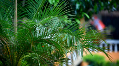 Rain on palm and other tree with blurred background. Shift in focus from near to Stock Footage
