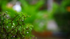 Rain on plants and trees with blurred background. Shift in focus from near to Stock Footage