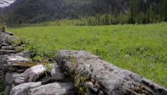 Jib shot of a meadow - Alps - stock footage