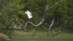 HIDASTUS: Kattohaikara leviää siivet ja lentää pois Arkistovideo