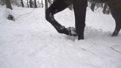 SLOW MOTION: Horse walking in fresh snow Stock Footage