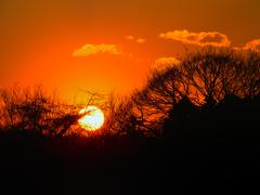 Silhouettes of leaves and trunk at sunset glow Stock Photos