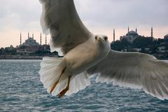 Portrait of a gull over the sea in front of istanbul Stock Photos
