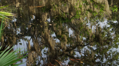 USA, Florida, Oscar Scherer St Park, Trees over pond Stock Footage