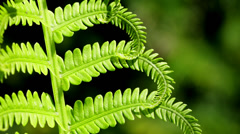Macro close-up of bright green fern fronds Stock Footage