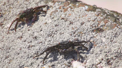 Crabs on the sandy beach. - stock footage