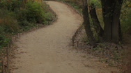 Walking path between trees in the park. Stock Footage