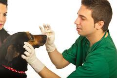 Vet giving pill to dog - stock photo