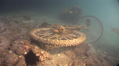 Harbour Rubbish Push bike underwater encrusted in growth #61-51 Stock Footage