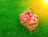 Stock Illustration of Crop of apples