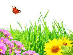 Stock Illustration of Summer frame