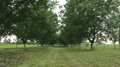 Orchard fruit trees nature beautiful green ecology Stock Footage