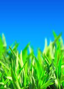 Stock Illustration of Green grass