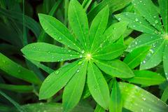 Stock Photo of Rain drops on a green leaves