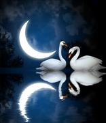 Two swans - stock illustration