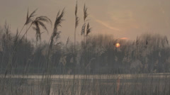 Autumn Pond Plume Reeds Twilight Afterglow Sunset - 25FPS PAL - stock footage