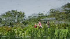 Slow motion/medium shot of people walking through green field / Stourhead, Stock Footage