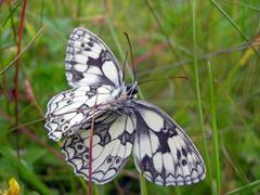 Butterfly on stalk Stock Photos