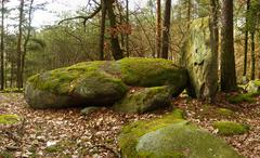 Boulders on forest Stock Photos
