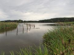 Late cloudy afternoon at a fishpond Stock Photos