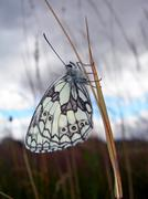 Butterfly on the stalk Stock Photos