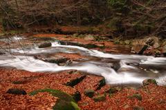 Wild mountain brook - stock photo