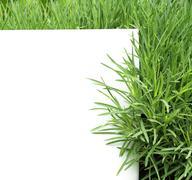 Stock Illustration of Green grass