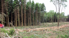 Logging industry Stock Footage