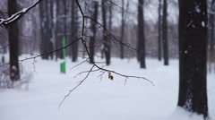 Snowfall in city park at winter twilight Stock Footage