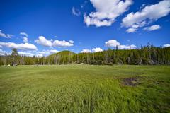 Yellowstone meadow. summer yellowstone meadow with forest and cloudy blue sky Stock Photos