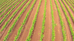 Aerial view of a vineyard Stock Footage