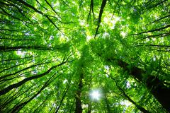 Stock Photo of forest