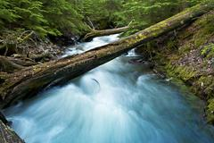 Forest creek and mountain stream. mossy log across the stream. montana, usa f Stock Photos