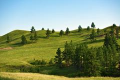 south dakota black hills landscape - hills and trees. nature photo collection - stock photo