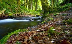 washington pacific northwest rainforest  -washington state usa. nature photog - stock photo