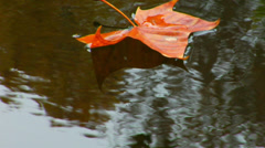 Leaf floating reflection water Fall Potomac Stock Footage