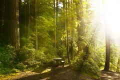sunny rainforest with wood bench in the olympic national park, washington usa - stock photo