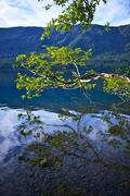 Dark blue, crystal clear crescent lake - branch above lake crescent surface. Stock Photos