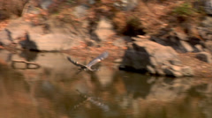 Crane flies along the Potomac River Stock Footage