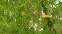 Leaf floating in Potomac Reflection of Trees Stock Footage