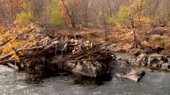 Potomac River on the Maryland side. Stock Footage