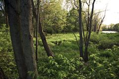 Swampy midwest woods - mid spring in illinois. Stock Photos