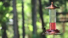 Hummingbird at Feeder 01 Stock Footage