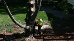 Tree winch being attached to the tree Stock Footage