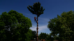 Tree cutting a top branch Stock Footage