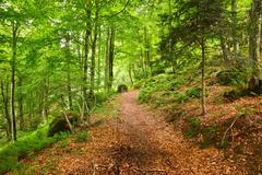 Mountain forest in Pyrenees Stock Photos