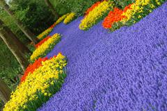 Spring flower bed - stock photo