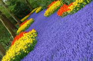 Stock Photo of Spring flower bed